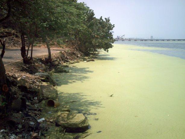 folge der verschmutzung der meere